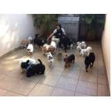 creche canina preço no Jardim Paulistano