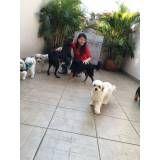 creche canina no Ibirapuera