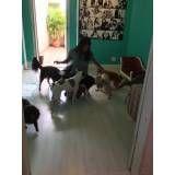 creche de cães preço no Campo Grande