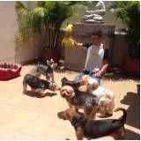 creche especializada em cachorros no Campo Grande