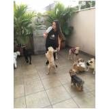 creche hotel para cães preço em Santa Isabel