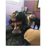 creche hotel para cães em Santo André