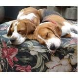 creche para cachorro em são paulo preço no Brooklin
