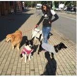 creche para cachorro em sp preço na Vila Mariana
