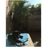 creches canina em Aricanduva