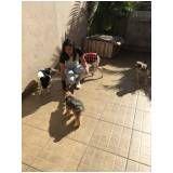 curso de adestramento de cães em São Miguel Paulista