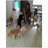 curso para adestrador de cães na Cidade Patriarca