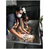 cursos de banho e tosa com aula pratica em Biritiba Mirim