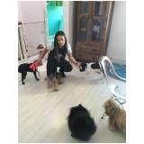 cursos para adestramento de cães preço no Pacaembu