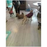 cursos para adestramento de cães em Glicério