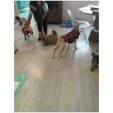 cursos para adestramento de cães na Mooca