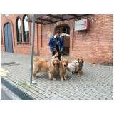 cursos para adestrar cães na Vila Carrão