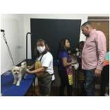 cursos para banho e tosa na Vila Formosa