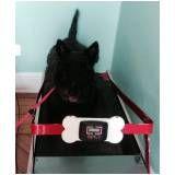 empresa de fisioterapia canina em Taboão da Serra