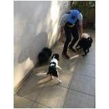 empresa especializada em adestramento de cachorro em José Bonifácio