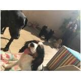 empresa especializada em creche para cães em Itapecerica da Serra