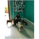 empresas de adestramento de cachorro preço em Itaquera