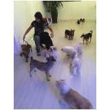 empresas de adestramento de cachorro na Cidade Dutra