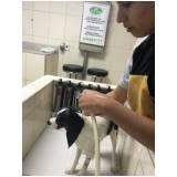 empresas de creche para cães em Alphaville