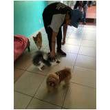 escola de adestramento para cachorro na Liberdade