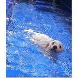 escola de natação para cachorro na Barra Funda