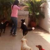 escola para adestramento de cães preço em Osasco
