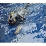 espaço de natação para cachorro em Jundiaí