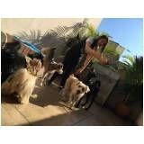 espaço dos cães em São Lourenço da Serra