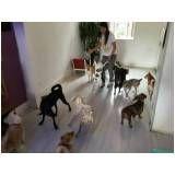 espaço para adestramento de cães na Cidade Ademar