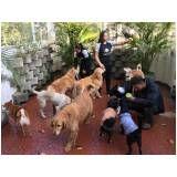 espaço para cachorro na Vila Carrão