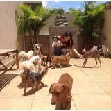espaço para cachorros em Santa Isabel