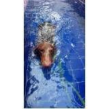 espaços de natação para cachorro no Pari