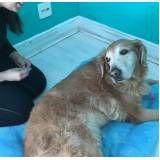 exercícios de fisioterapia canina em São Lourenço da Serra