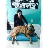exercícios de fisioterapia para cães no Pacaembu