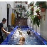 exercícios de natação para cachorro em Moema
