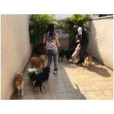 fisioterapia animal preço no Cambuci