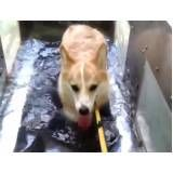 fisioterapia canina em são paulo na Vila Buarque