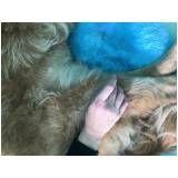 fisioterapia canina em sp preço em Barueri