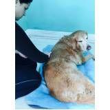 fisioterapia canina preço no Pacaembu