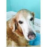 serviços de fisioterapia canina