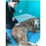 fisioterapia canina em Itapecerica da Serra