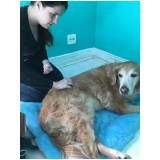 fisioterapia canina em Interlagos
