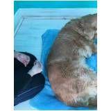 fisioterapia e hidroterapia para cães em Taboão da Serra