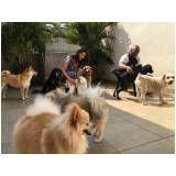 fisioterapia e reabilitação canina em Taboão da Serra