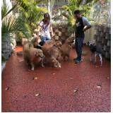 fisioterapia e reabilitação para cachorros em Pinheiros