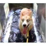fisioterapia especializada em cães em Suzano