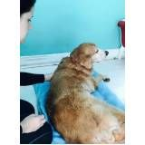 fisioterapia para cachorros preço no Cambuci