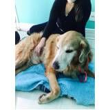 fisioterapia para cães no Ibirapuera