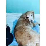 fisioterapia veterinária para cães no Campo Grande