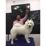 Hand-Stripping em Cães no Jockey Club